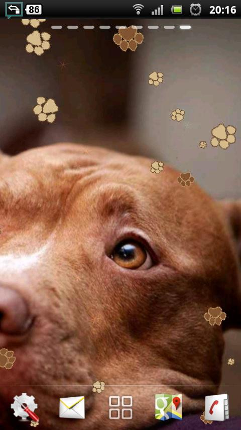 ... of pit bull attacks were nonexistent the sight of a pit bull walking