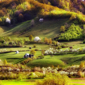 the hobbit land by Nicu Hoandra - Landscapes Mountains & Hills ( hills, tree, spring, colours )