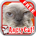 Angry Cat Free! icon