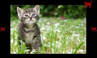 Screenshot of Babies love cats