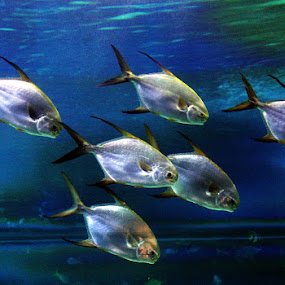 Fish by Ned Kelly - Animals Fish ( acquarium, fish,  )