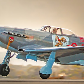 Yakity Yak by Tony Buckley - Transportation Airplanes ( vintage aircraft, warbird, aircraft, air show )