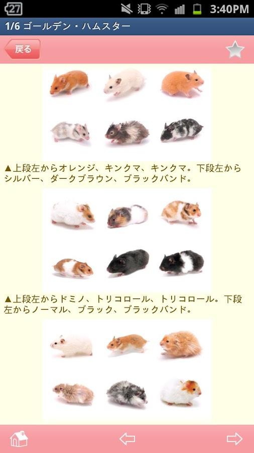 かわいい小動物図鑑- screenshot