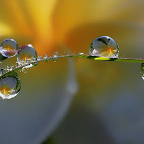 :: Morning dews :: by Dedy Haryanto - Nature Up Close Natural Waterdrops