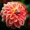 IMG_1298-15.jpg