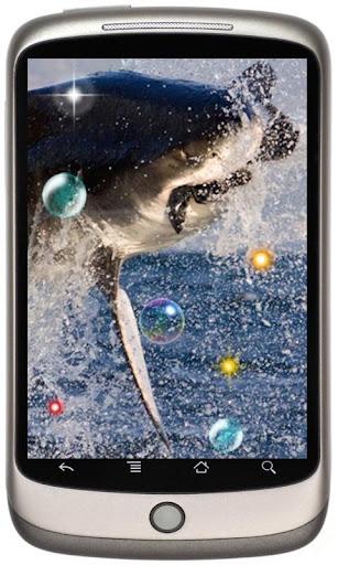 Sharks live wallpaper