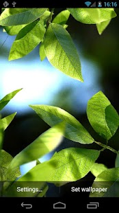 Fresh Leaves- screenshot thumbnail