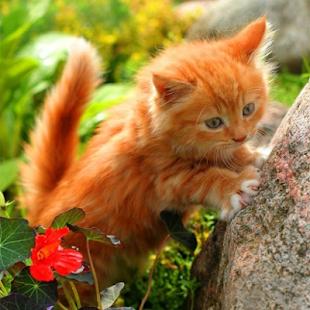 Dik zencefil kedi yavrusu