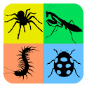Insect & Arachnid Life Cycle icon