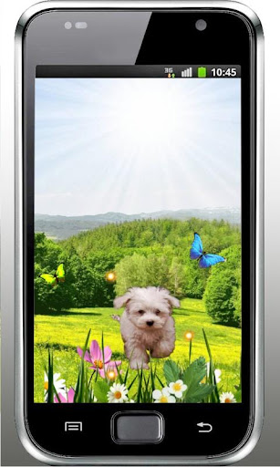 Spring Puppy live wallpaper