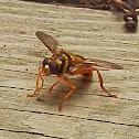 News Bee / Yellowjacket Hover Fly
