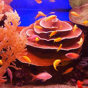 Rare fish aquarium by Name of Rose - Animals Fish ( rare fish eilat obstervatory )