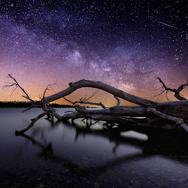 Chaos by Aaron Groen - Landscapes Starscapes ( water, pwcstars, waterscape, meteor, starscapes, milky way stars, south dakota, dead tree, milky way, stars, night, starscape, lake alice )
