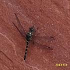 Granite Ghost dragonfly