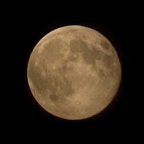 Supermoon! by Amy Woldrich - Nature Up Close Other Natural Objects ( luna, moon, lunar, night, landscape, supermoon )