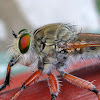 Large Robberfly