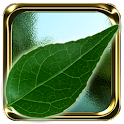 Dream of Nature Premium icon