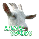 Awesome Animal sounds
