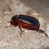 Blue night scarab