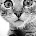 Cute Animals Wallpaper Cats
