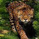 Moving Leopard Live Wallpaper