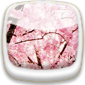 Cherry Blossom★ Wallpaper 01