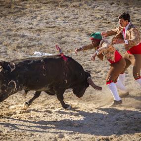 Bullfight by Vasco Morais - News & Events World Events ( sport, bullfight )
