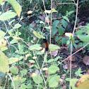 Wolly bear caterpillar