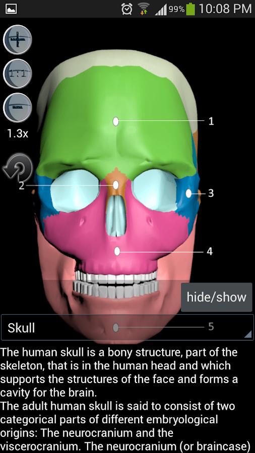 Human bones lite - screenshot