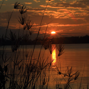 My Sunshine by Havidz Zhurrahman - Landscapes Sunsets & Sunrises ( nature, sunrise, landscape,  )