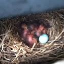 Mocking birds :)