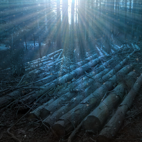 by Mark Heath - Landscapes Forests (  )