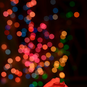 red rose  by Abhijeet Kumar - Artistic Objects Other Objects ( rose, red rose, bokeh )