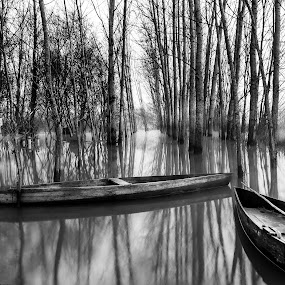 by Paulo Veiga - Black & White Landscapes ( calm, waterscape, bw, reflections, landscape, portugal, paulo veigaphotography, water, peaceful, 2014, black & white, mood, pixoto, boat, resting, black and whithe, bushes, fog, flood, aveiro, pateira-fermentelos, reflections on water, trees, silhouettes, spate, mist,  )
