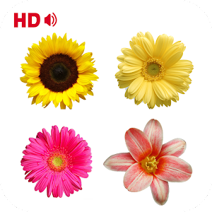 Coloring Flower Pages for PC and MAC