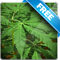 Marijuana Free live wallpaper icon