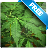 Marijuana Free live wallpaper