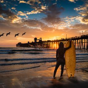 Contemplation by Alan Crosthwaite - Landscapes Beaches ( oceanside, southern california, waves, pacific ocean, tourism, ocean, travel, contemplate, coastal, destination, piers, surfer, sunset, surfboard, contemplation, pelicans, pier,  )