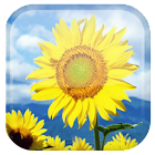Sunflower fundo dinâmicar icon