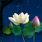 Lotus Pond Live Wallpaper
