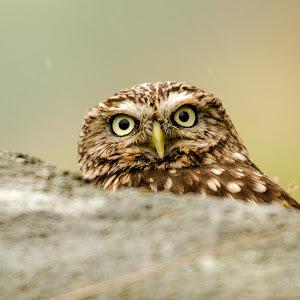 C:\Users\rooty\Pictures\birds of prey workshop\2014 07 19_5366.jpg