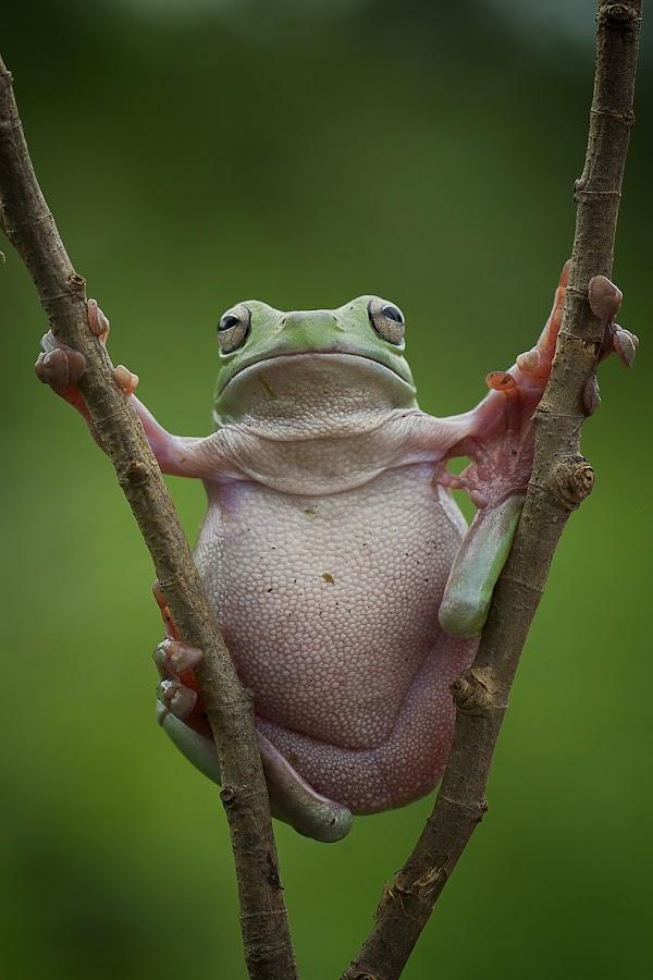 by Adi Parmana - Animals Amphibians