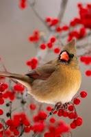 Screenshot of Singing Birds Live Wallapaper