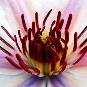 by Ruy Lopes - Flowers Single Flower ( flor estames )