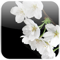 Lovely Sakura Live Wallpaper icon