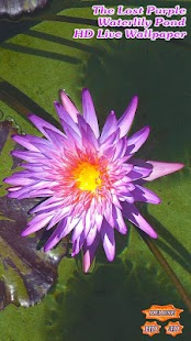 The Lost Purple Waterlily Pond- screenshot thumbnail