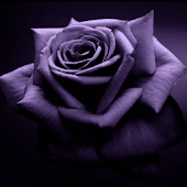 Rose 3D Live Wallpaper