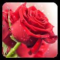 红玫瑰动态壁纸 icon