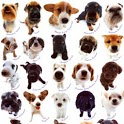 Amazing Dogs Photo Gallery icon