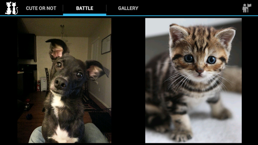 Kitten or Puppy - Super Cute